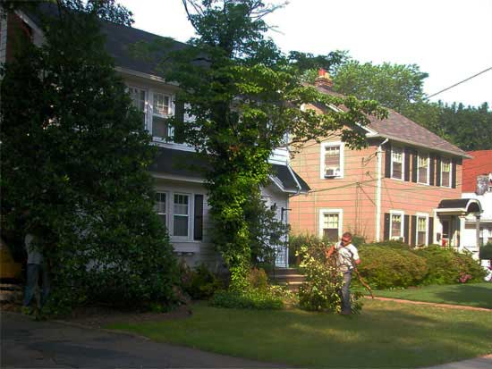 Before - Overgrown Landscape Depletes Your Home of Interior Natural Light and Curb Appeal